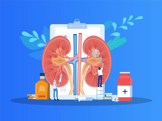 Illustratie nierfalen nierziekte nierdoorsnede