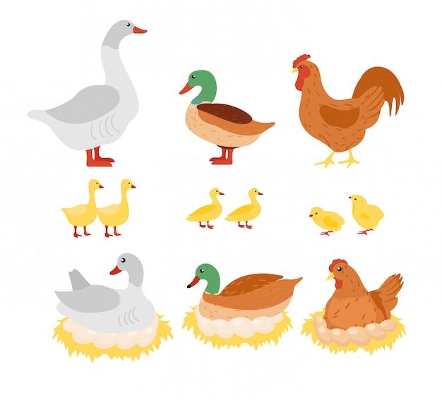 Illustratie set gevogelte, kip, kip, haan en eend, gans op het nest met eieren in platte cartoon design.