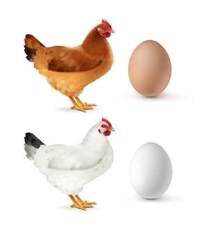 Illustratie van bruine en witte kip met eieren geïsoleerd op een witte achtergrond
