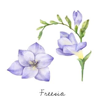 Illustratie van de bloem van de fresia die op witte achtergrond wordt geïsoleerd.