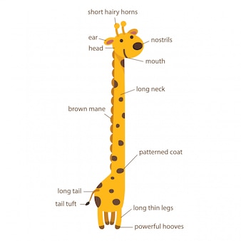 Illustratie van een deel van de girafwoordenschat van lichaam