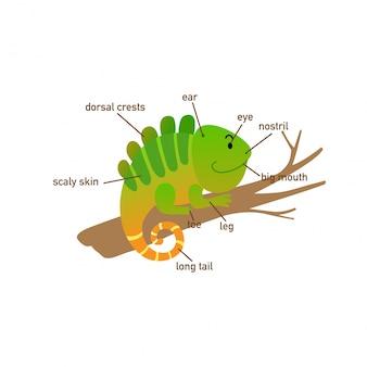 Illustratie van een deel van de leguaanvocabulaire van body.vector