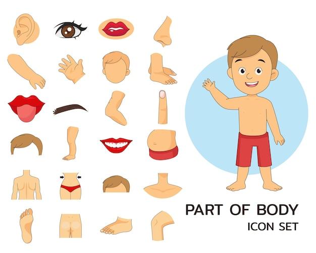 Illustratie van een deel van het lichaam