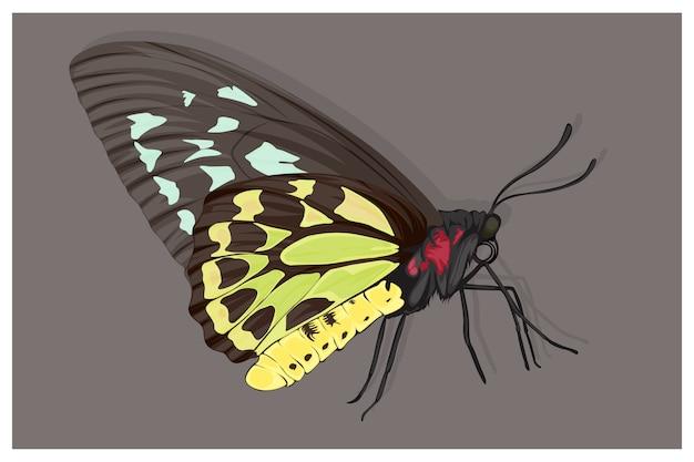 Illustratie van een vlinder in zwart, groen en geel lichaam