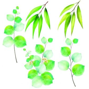 Illustratie van eucalyptus die op witte achtergrond wordt geïsoleerd