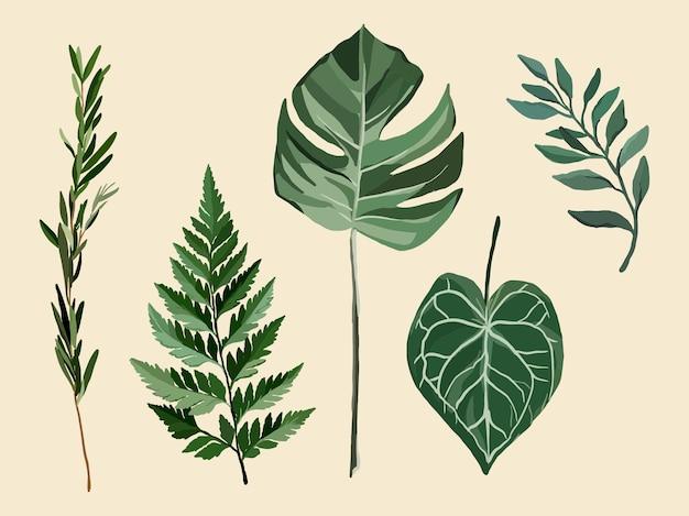 Illustratie van exotische planten, varen, monstera, rozemarijn