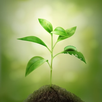 Illustratie van groene jonge spruit groeien in de bodem