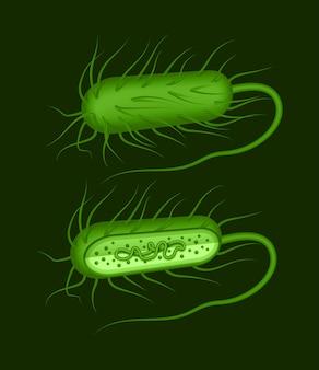Illustratie van groene staafvormige bacillusbacteriën