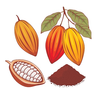 Illustratie van hele cacaoboon, rijpe cacao en cacaopoeder