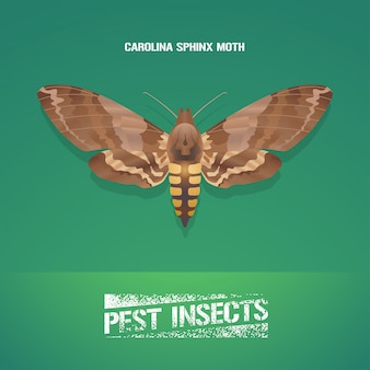 Illustratie van insect manduca sexta (carolina sphinx mot)