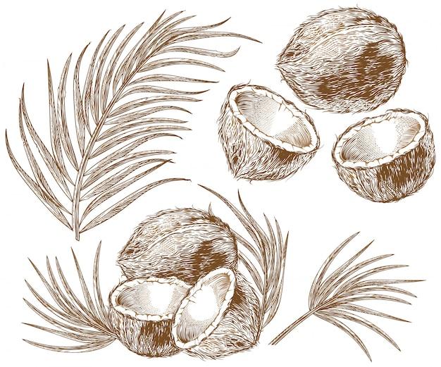 Illustratie van kokosnoot en palmbladen