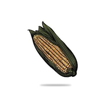 Illustratie van maïs in graveerstijl