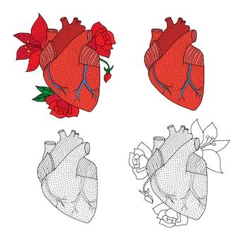 Illustratie van menselijk hart op wit wordt geïsoleerd