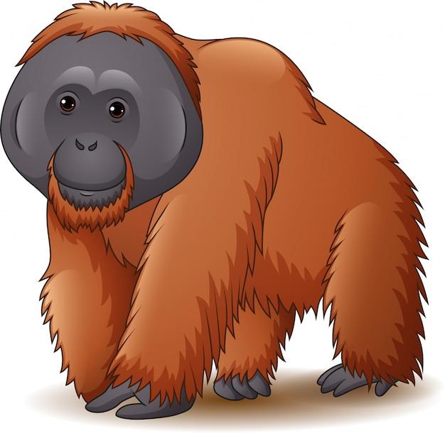 Illustratie van orangoetan die op witte achtergrond wordt geïsoleerd