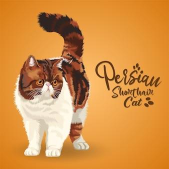 Illustratie van perzische korthaar exotische kat.