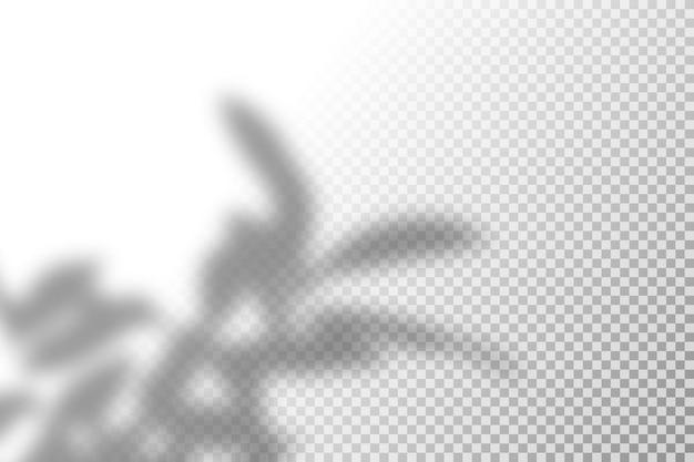 Illustratie van realistisch tropisch schaduw-overlay-effect.