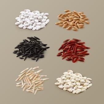 Illustratie van stapels van verschillende rijstvariëteiten, waaronder jasmijn, basmati, wilde rijst en voorgekookt in rood, wit, bruin en zwart op achtergrond