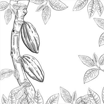 Illustratie van tak cacaoboom in gravurestijl