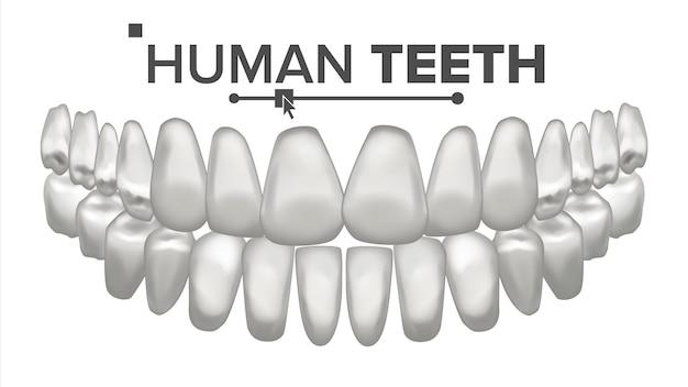 Illustratie van tanden set
