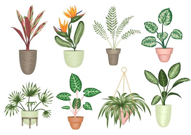 Illustratie van tropische kamerplanten in potten geïsoleerd. heldere realistische strelitzia, monstera, alocasia, dieffenbachia, cordyline.