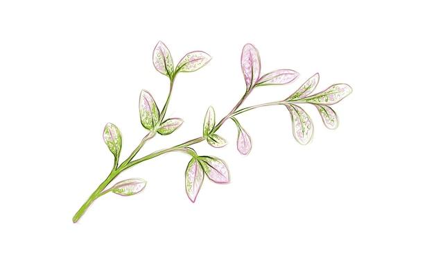 Illustratie van verse manilla-tamarinde op wit