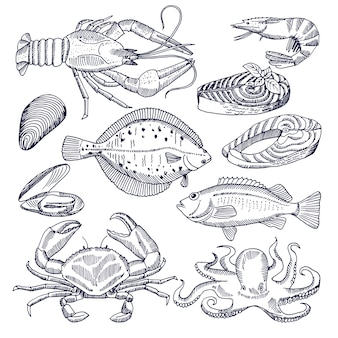 Illustraties van zeevruchten voor de gastronomische keuken van het restaurant. oesters, kreeften en vissen. afbeeldingen voor menu zeevruchten, zalm en krab, mossel en vis