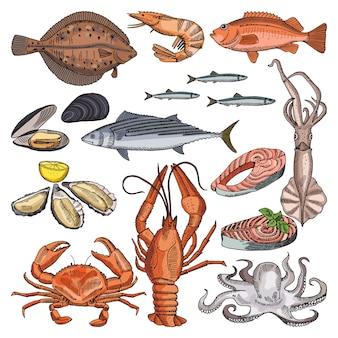 Illustraties van zeevruchtenproducten voor gastronomische menukaart. vectorafbeeldingen van inktvis, oester en anders