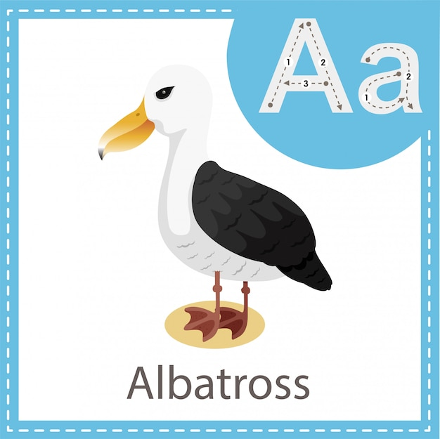 Illustrator van albatross-vogel