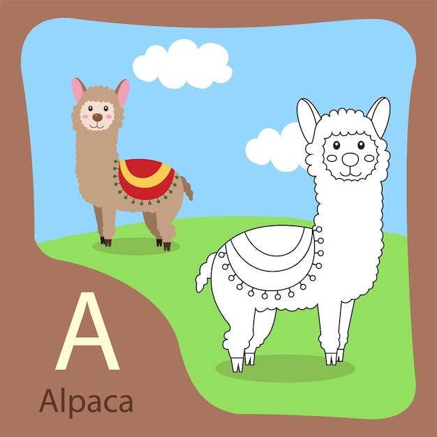 Illustrator van alpaca geïsoleerd en kleuren