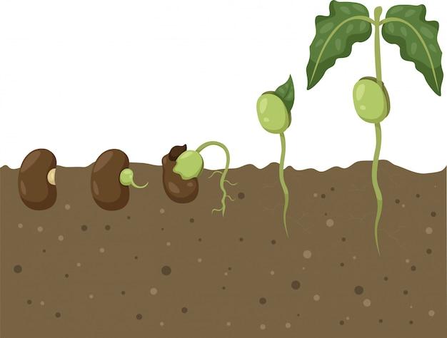 Illustrator van beans cycle