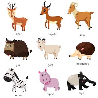 Illustrator van dierenset van de dierentuin twee