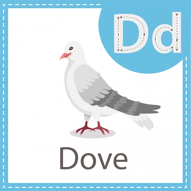 Illustrator van dove-vogel