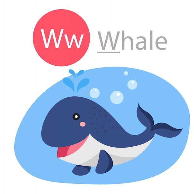 Illustrator van w voor walvisdier