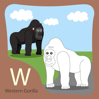 Illustrator van westelijke gorilla geïsoleerd en inkleuren
