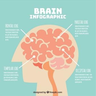 Infographic sjabloon van het menselijk brein met vier opties