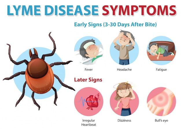 Infographic van de symptomen van de ziekte van lyme