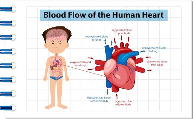 Informatie poster van menselijk hart diagram