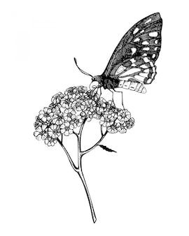 Inkt hand getekende vlinder op duizendblad plant