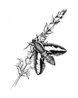 Inkt hand getekende vlinder op salie bloem