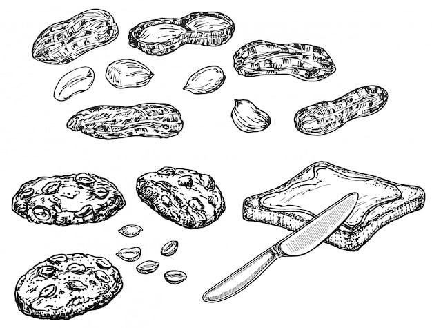 Inktschets van noten