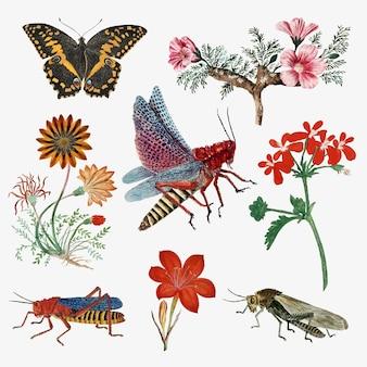 Insecten en bloemen vector vintage natuur illustratie, geremixt van de kunstwerken van robert jacob gordon