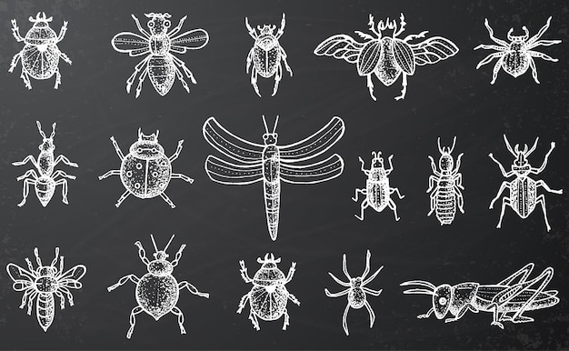 Insecten set met kevers, bijen en spinnen op zwart schoolbord. gegraveerde stijl.