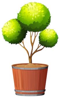 Installatie in pot met geïsoleerde grond