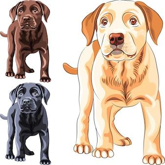 Instellen puppy hondenras labrador retriever
