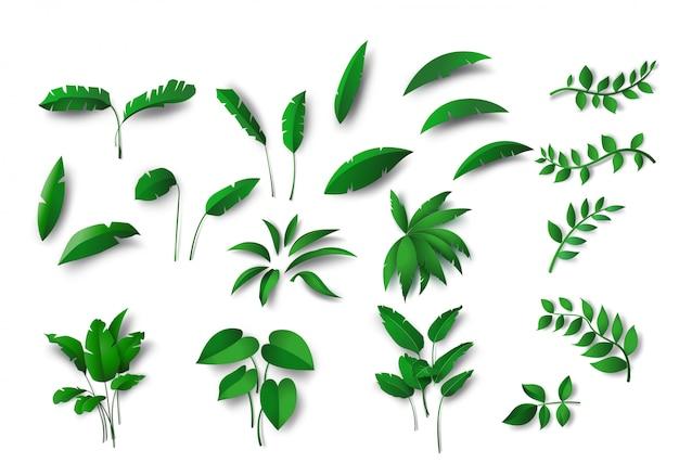 Inzameling divers van groen tropisch bladerenconcept, geïsoleerde elementen op witte achtergrond