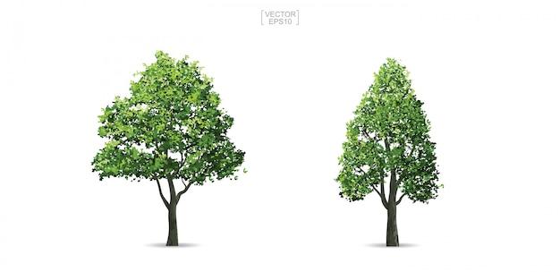 Inzameling van boom op witte achtergrond wordt geïsoleerd die.