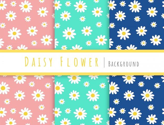 Inzameling van daisy bloemachtergrond.