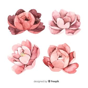 Inzameling van mooie pioenbloemen in waterverfstijl