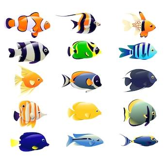Inzameling van oceaanvissen die op wit wordt geïsoleerd
