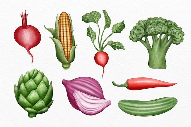 Inzameling van verschillende geïllustreerde groenten